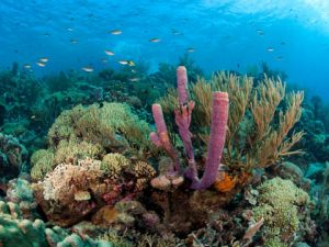 Bonaire's-Pristine and-Glowing-Coral-Reefs-3