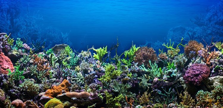 Florida-Coral-Reefs4