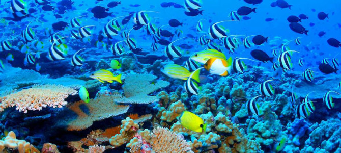 16. New Calcedonia Barrier Reef, France: The Second Largest Barrier Reef in the World