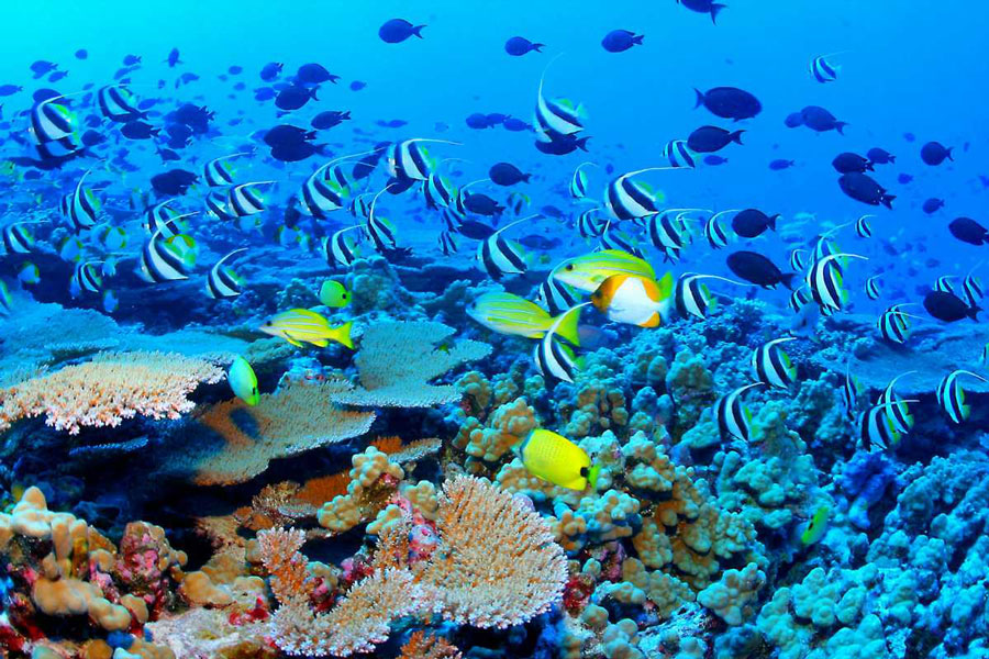 New-Calcedonia-Barrier-Reef3