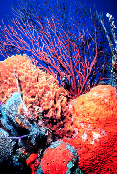 New_Caledonia_Barrier_Reef2