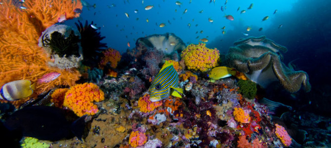 1. The Eldorado of Coral Reefs: Raja Ampat, Indonesia