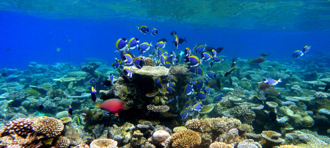 20. With Fishes Never Before Seen by Scientists: The Reefs of the Maldives