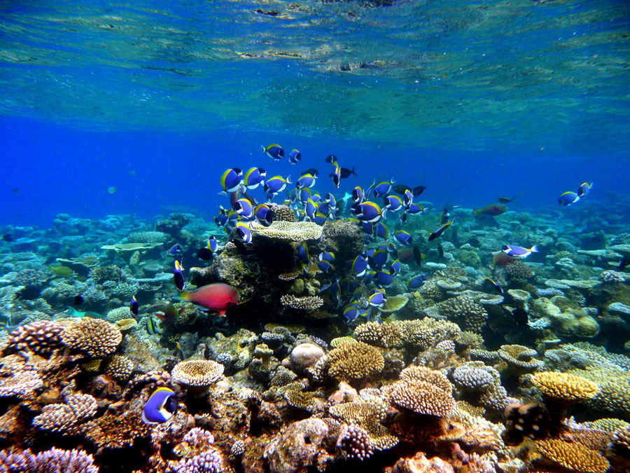 Reefs-of-the-Maldives1