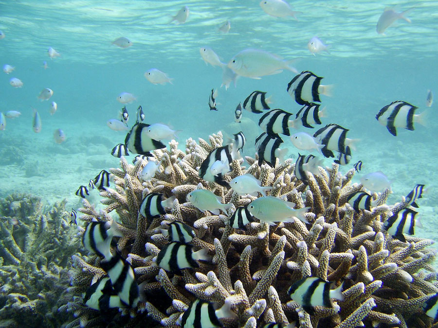 Reefs-of-the-Maldives2