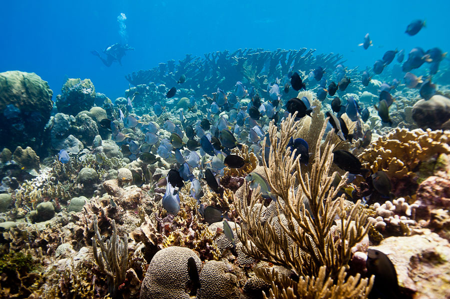 The-MesoAmerican-Barrier-Reef2