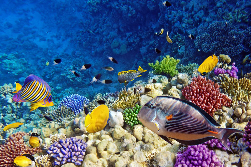 The-Red-Sea-Reef-of-Egypt1