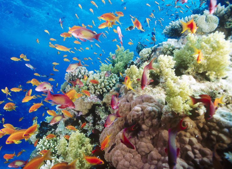 The-Red-Sea-Reef-of-Egypt2