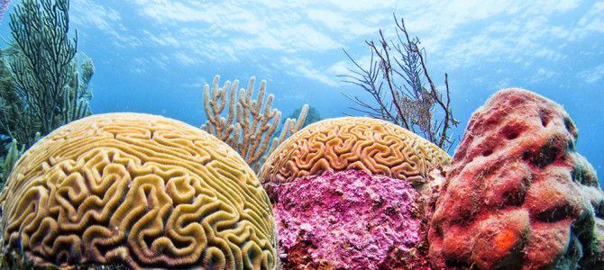 9. Belize Barrier Reef:  Number One in the Seven Wonders of the Underwater World