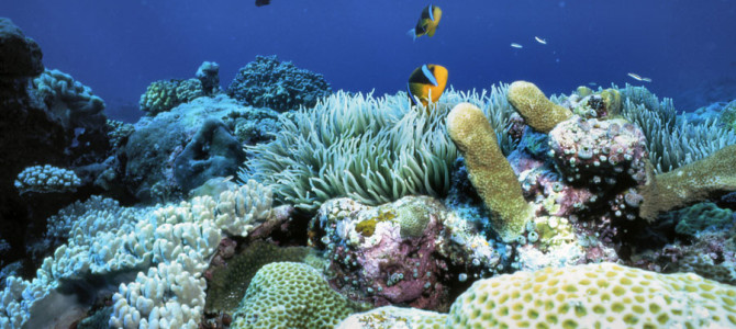 14. Palau Reef: The Exception to the Rule